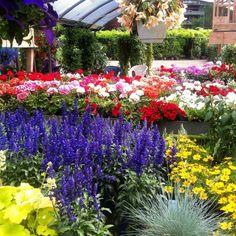 Cose che amo di Milano: entri in un cortile così per curiosità e ti trovi davanti un paradiso di piante e fiori. Mille colori e profumi che ti fanno dimenticare completamente di essere in città.  Esplora e curiosa. C'è sempre qualcosa che ti potrà sorprendere.  // #thingsiloveaboutmilan #milanonascosta #milanodavedere #cortilidimilano #secretgarden #milano #aroundmi #exploredreamdiscover #milanogo #milaninsight #volgomilano #milanomia #lecosechepiaccionoame #vivodiparticolari…