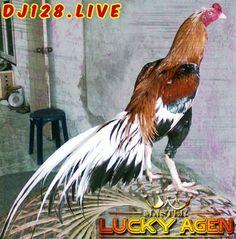 89 Gambar Ayam Yokere Kekinian