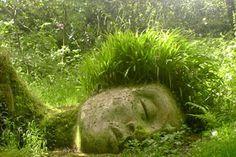 ALGO QUE CONTAR: Los jardines perdidos de Heligan