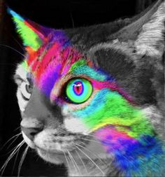 colorfulkitty