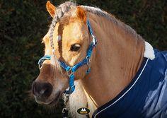 Op zoek naar een halster met een print die anders is dan anders? Wat dacht je van het MHS halster Rainbow in de kleur blauw? Horse Supplies, Color Blue, Dan, Rainbow, Horses, Prints, Animals, Rain Bow, Rainbows