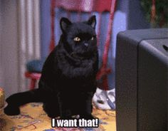 When someone posts their avocado toast on Instagram | 27 Times Salem The Cat Understood You