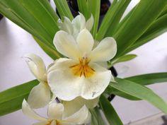 Orquídeas de Colombia !!!