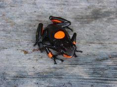 orange spotted frog