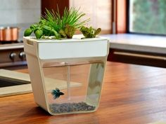 Oo, Oo!! I want! I can grow basil and keep a fish happy all at the same time :)