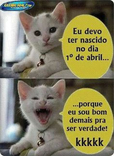 Laercio Tenorio added a new photo. Gato Do Face, Ted, Cat Memes, Funny Moments, Funny Photos, Animals And Pets, Funny Cats, Haha, Have Fun