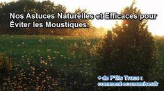 Nos Astuces Naturelles et Efficaces pour Éviter les Moustiques.