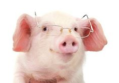 A Brief Intro to Apache Hive and Pig #hadoop