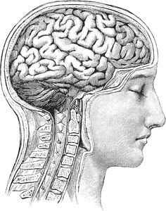 Brain diagram front view art inspiriation pinterest brain httpwallstreetotcwp contentuploads201501braing ccuart Images