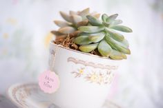 [THE LITTLE TEACUP SUCCULENT WE MADE FOR ERIN & TOM'S ENGAGEMENT SESSION] A romantic engagement session at Fairchild Tropical Botanic Garden and Key Biscayne // photos by PhotoNotions Photography, LLC: http://www.tjphotonotions.com || see more on http://www.artfullywed.com