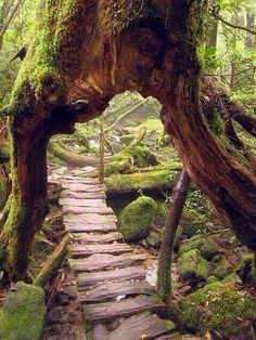 L'image du jour : Chemin en bois dans une forêt à Yakushima, Japon
