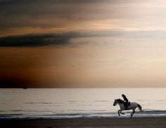 Empty beach, wild horse ride... Oh how I wish I can be there!