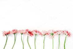 gerbera flowers Creative arrangement of gerberas on white background… Bedroom Wallpaper Red, Peach Wallpaper, Damask Wallpaper, Trendy Wallpaper, New Wallpaper, Wallpaper For Your Phone, Laptop Wallpaper, Kate Spade Wallpaper, Cool Desktop Backgrounds