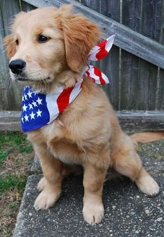Proudly wearing the colors of red,white & blue. Yup, I'll be doing this with my dogs. :)