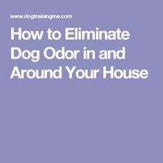 How to Eliminate Dog Odor in and Around Your House