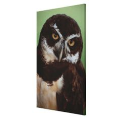>>>Cheap Price Guarantee          Owl 6 stretched canvas prints           Owl 6 stretched canvas prints In our offer link above you will seeReview          Owl 6 stretched canvas prints Review on the This website by click the button below...Cleck Hot Deals >>> http://www.zazzle.com/owl_6_stretched_canvas_prints-192418909678671084?rf=238627982471231924&zbar=1&tc=terrest