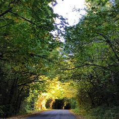 on the Aufderheide Scenic By-Way early Oct. 2015!