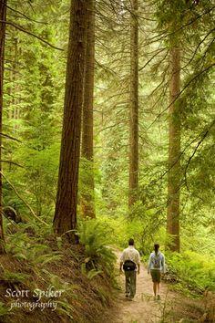 Hiking in Forest Park in Portland, Oregon