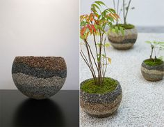 Brilliant Strata pot helps raise a tree indoors before returning ...