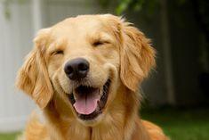 cachorro de oculos tumblr - Pesquisa Google