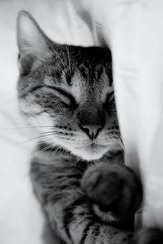 Imagen de cat, cute, and animal