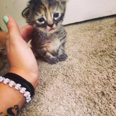 """The best part about being tiny is that you only need a fingertip to give me a back scratch!"" 