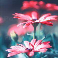 Blumen rot Pastell