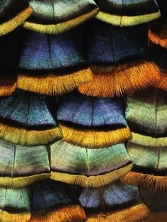 Detail of a Turkey Feather Photographic Print by Darrell Gulin at AllPosters.com