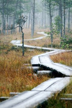 Boardwalk path (Torronsuo National Park, Tammela, Finland) by Suensyan cr. Landscape Architecture, Landscape Design, Places To Travel, Places To Visit, Parque Natural, Design Jardin, Adventure Is Out There, Pathways, Beautiful Landscapes