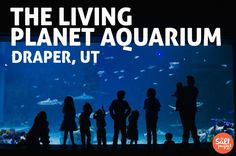 Loveland Living Planet Aquarium | Draper | Field Trippin' | The Salt Project | Things to do in Utah with kids