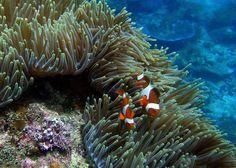 Le più belle barriere coralline del mondo, ecco i migliori posti per immersioni e snorkeling   Spiaggia.Piksun.com