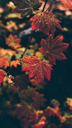 Iphone Wallpaper Zedge, Leaves Wallpaper Iphone, Autumn Leaves Wallpaper, Fall Wallpaper, Nature Wallpaper, Iphone Wallpapers, Autumn Cosy, Autumn Nature, Autumn Fall