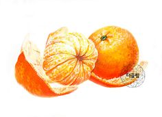 Painting & Drawing, Watercolor Paintings, Fruits Drawing, Watercolor Fruit, Basic Drawing, Realistic Paintings, Fruit Art, Food Illustrations, Christmas Art