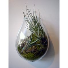 Glass Terrarium Containers | Recycled Glass Bubble Wall Terrariums | Sprout Home