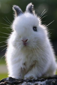 The worlds fluffiest bunny? Well certainly the most adorable!...