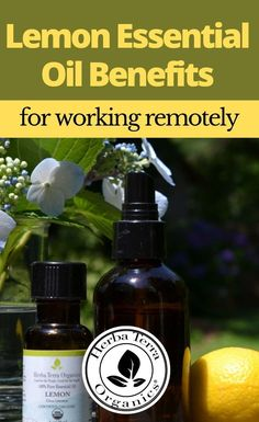 Essential oils like Lemon can help those who are having difficulty focusing. Lemon Oil can be employed aromatically to boost one's stamina, relieve mental fatigue in the morning, improve mental clarity, overcome procrastination, and also put forth a cheerful attitude. Tap the Image for more info. #herbaterraorganics #organicoils #lemonoil Lemon Essential Oil Benefits, Helichrysum Essential Oil, Clary Sage Essential Oil, Frankincense Essential Oil, Lemongrass Essential Oil, Essential Oils For Memory, Oils For Energy, Aromatherapy Recipes, Lemon Oil