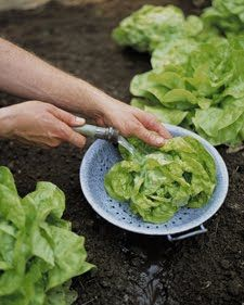 Great Idea!!! Wash your freshly picked veggies outside - don't waste water down the sink, use it to grow more goodies.