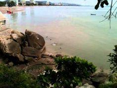 The famous Diving Monkeys at Khao Takiab in Hua Hin  http://www.youtube.com/watch?v=5ixnXfcqlQc Thailand #monkeys