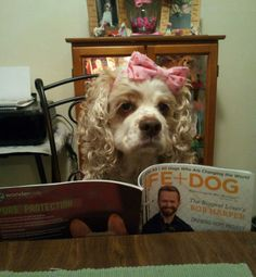 Gucci catching up on the latest news in the Doggie World....She's an avid reader...