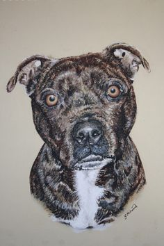 Steve Millward - Artists & Illustrators - Original art for sale direct from the artist Original Art For Sale, Original Artwork, Beautiful Artwork, Illustrators, Dog Cat, The Originals, Pets, Artist, Animals