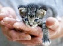 rescued cat