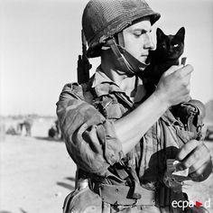 猫と人間の歴史、戦場の猫たち : カラパイア
