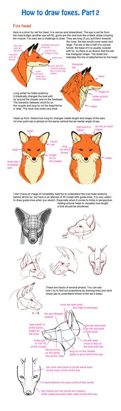 How to draw fox, part 2 by Elruu.deviantart.com on @deviantART