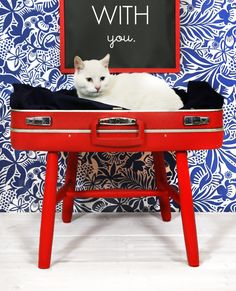 DIY Cat Bed from old suitcase and chair - Tutorial love the chalk board above it