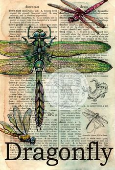 PRINT: Dragonfly Mixed Media Drawing on Distressed, Dictionary Page Mixed Media