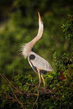 Great Blue Heron Posing by Mark Jones on 500px
