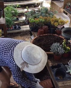 Succulents garden 813462751423569327 - Want to learn how to repot succulents correctly? Read out latest article! Succulent Gifts, Succulent Wall, Succulent Gardening, Succulent Arrangements, Succulent Terrarium, Terrariums, Repotting Succulents, Succulents In Containers, Cacti And Succulents