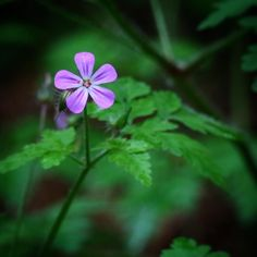 Ukrudt!  #visitfyn #fyn #nature #nature_perfection #naturelovers #mothernature #natur #denmark #danmark #dänemark #landscape #assensnatur #assens #mitassens #vildmedfyn #fynerfin #vielskernaturen #visitassens #instapic #picoftheday #summer2016 #sommer