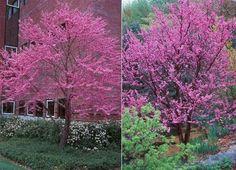 in Home & Garden, Yard, Garden & Outdoor Living, Plants, Seeds & Bulbs