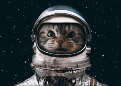 Space catet by Seamless